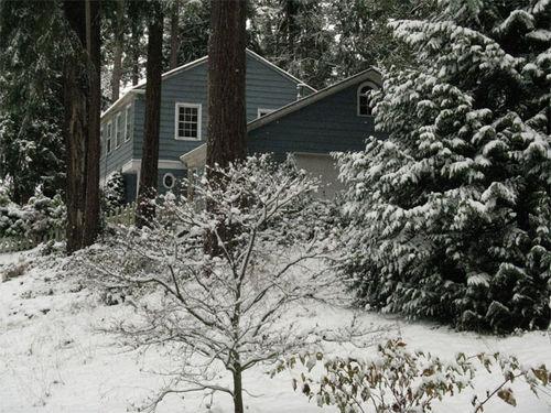 8195_snowday